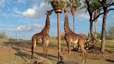 Phoenix Zoo- one of the top 5 in the country!