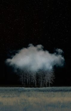 Photography & Poetry - Photo & Poésie - Cloud in the Trees by David Jordan Williams