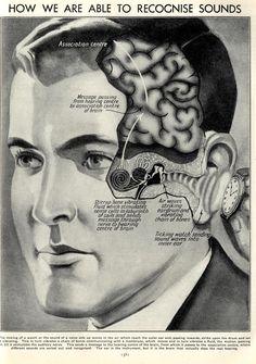 Recognizing sounds Internal Affairs, Brain, Classroom, Technology, Music, Inspiration, Art, The Brain, Class Room