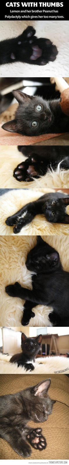 More cat feets...