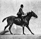 Jumping man riding horse over low hurdle