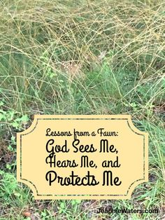 Lessons from a Fawn: God Sees Me, Hears Me, and Protects Me
