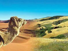 Nature is never far away in Morocco. Desert, mountains, valleys and sea - the country has plenty to offer fans of the outdoors!