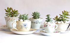 Vintage succulent
