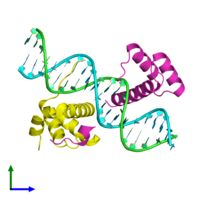 <ul class ='image_legend_ul'>The deposited structure of PDB entry 1b72 coloured by chain and viewed from the front. The entry contains: <li class ='image_legend_li'>1 copy of DNA (5'-D(*AP*CP*TP*CP*TP*AP*TP*GP*AP*TP*TP*GP*AP*TP*CP*GP*GP*CP*TP*G)-3')</li><li class ='image_legend_li'>1 copy of DNA (5'-D(*TP*CP*AP*GP*CP*CP*GP*AP*TP*CP*AP*AP*TP*CP*AP*TP*AP*GP*AP*G)-3')</li><li class ='image_legend_li'>1 copy of Homeobox protein Hox-B1</li><li class ='image_legend_li'>1 copy of Pre-B-cell…