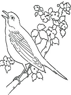 36 Best coloring pages canary bird images in 2019