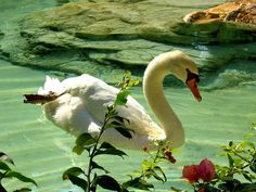 The ugly duckling turned into a beautiful swan…