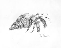 hermit crabs drawing - Google Search