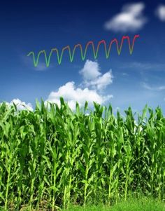 The intense farming practices of the 'Green Revolution' are powerful enough to alter Earth's atmosphere at an ever-increasing rate, boosting the seasonal amplitude in atmospheric carbon dioxide to about 15 percent over the past five decades. That's the key finding of a new atmospheric model, which estimates that on average, the amplitude of the seasonal oscillation of carbon dioxide in the atmosphere is increasing at a rate of 0.3 percent every year.