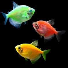 my fish names 1. green ,Leonidas 2. pink, Persephone  3. orange Spartacus and blue hades