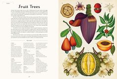 Fruits, Botanicum Illustrator Katie Scott has skipped back in time to when botanical illustration was cool, creating a stunning new book that took six months of solid drawing to make.