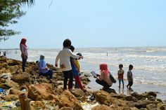 Indahnya Panorama Pantai Mangrove Center Tuban