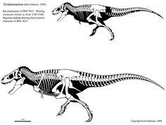 tyrannosaurusstan skeletaldrawing.com Scott Hartman