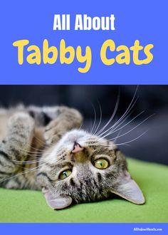 Grey Tabby Kittens, Orange Tabby Cats, Cats And Kittens, Taking Care Of Kittens, Pedigree Cats, Kitten Cartoon, Mean Cat, Cat Fun, Cat Behavior