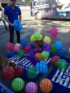 Rose and Sully pop balloons to help kick off #BlogPaws