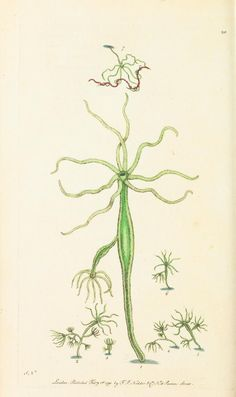 1791 v.1 - The naturalist's miscellany, or Coloured figures of natural objects - Biodiversity Heritage Library | Hydra