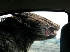 DDN JAPAN - イヌが速度の限界を超えると祟り神になる もっと見る