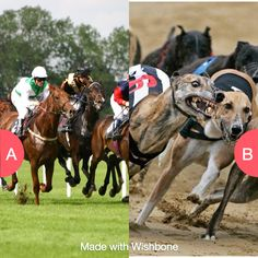 Horse or dog racing? Click here to vote @ http://getwishboneapp.com/share/4795654