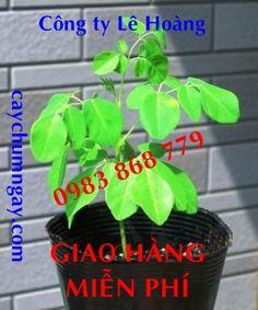 http://www.pinterest.com/caynongaydat