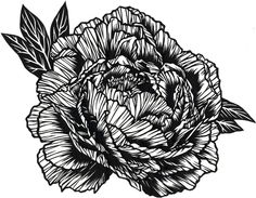 Rose – Paper cut