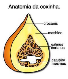 anatomia da coxinha