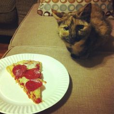 The Daily Cute: Pizza Cats