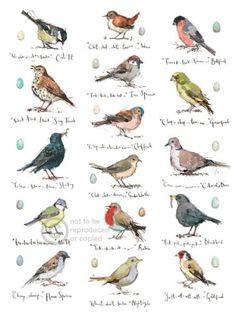 Garden Birds by Madeleine Floyd Watercolor Bird, Watercolor Animals, Watercolor Paintings, Watercolors, Watercolor Portraits, Watercolor Landscape, Abstract Paintings, Art Paintings, Bird Drawings