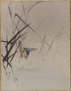 Bird Catching Fish Among Reeds 渡辺省亭 Watanabe Seitei (Japanese, 1851–1918) Period: Meiji period (1868–1912) Culture: Japan Medium: Album leaf; ink and color on silk Dimensions: 14 1/8 x 10 3/4 in. (35.9 x 27.3 cm) Classification: Painting