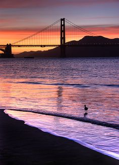 Crissy Fields sunset, San Francisco. I want to visit there again! San Fran is a great place to visit!