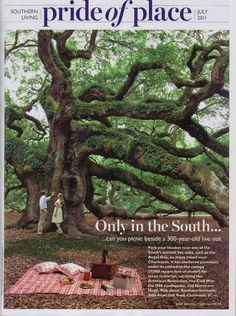 Only in the south can you picnic beside a 300 year old live oak. Park your blanket near one of the south's ancient lice oaks, such as the Angel Oak on Johns Island near Charleston. It has sheltered picknickers under its cathedral like canopy (17000 square feet of shade) for three centuries, surviving the American Revolution, the Civil War, the 1889 Earthquake, and Hurricane Hugo. Talk about Southern Fortitude.