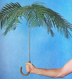 Philip Garner's palmbrella sculpture