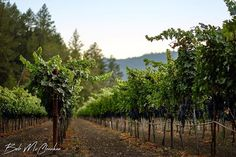 Stone Wall Vineyard