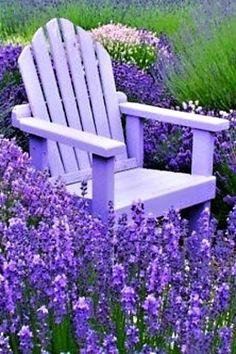 Snad v každé zahradě, kde se najde pergola, altánek, plot nebo domek na nářadí, lze také uplatnit ba
