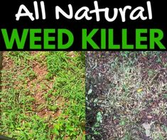 Get here the 3 ingredient natural weed killer homemade recipe that is easy to make and won't hurt the earth and stops the weed from growing. You will like it!