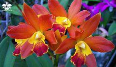 Die 19 besten Bilder von Orchideen in 2013 | Pflanzen, Ausstellungen ...