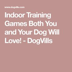 Indoor Training Games Both You and Your Dog Will Love! - DogVills