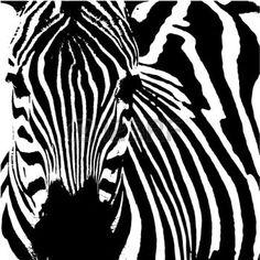 zebra: Vector illustration of a zebra