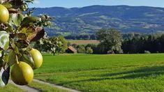 Pöllauer Tal in der Steiermark Heart Of Europe, Park, Road Trip Destinations, Nature, Tips, Parks