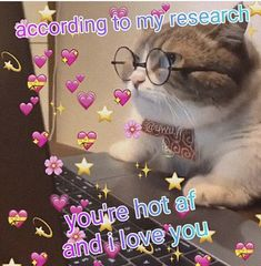 Text Memes, Fb Memes, Wholesome Pictures, Cute Love Memes, Anime Expressions, Cute Messages, Youre Cute, Dio, Wholesome Memes