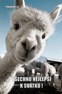 Animals, Funny Sayings, Animales, Animaux, Animal, Animais