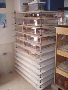 Adjustable Rack System It's smaller, but not what I have in mind. Terrariums, Gecko Terrarium, Terrarium Reptile, Reptile Habitat, Reptile Room, Reptile Cage, Les Reptiles, Cute Reptiles, Gecko Cage
