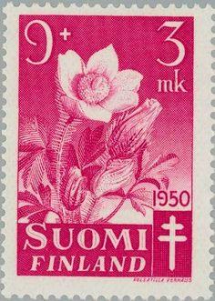 Spring Pasque Flower (Pulsatilla vernalis)