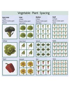 vegetable garden spacing for square foot gardening