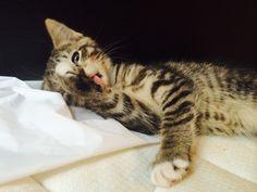 Wonderful Aww.. Meow.. Cats of Love Photos (82) Check more at http://dougleschan.com/the-recruitment-guru/uncategorized/aww-meow-cats-of-love-photos-82/