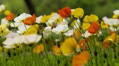 Resultado de imagem para красивые картинки природы лето
