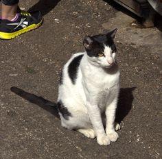 Herzel the Cat