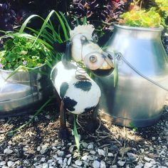 Thanks for adding to our herd @gr8ful1994 and even knowing this was a #Holstein. Love it by the bucket milkers I used growing up with my show cows. #gardenart #dairy