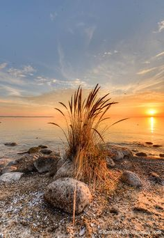 beach grass and Lake Michigan, Sleeping Bear National Lakeshore, Michigan.