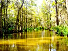 Photos in Kelly, LA - Louisiana Swamp  merchantcircle.com