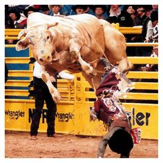 Bodacious, Livestock • Bull • Inducted 1999 One heck of a bull